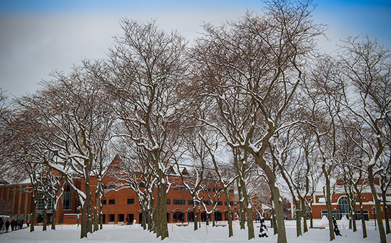 Snow on a stand of trees at the University of Vermont