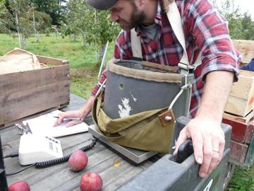 UVM Catamount Farm Apple Orchard Research
