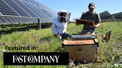 Solar farm with beekeepers in foreground