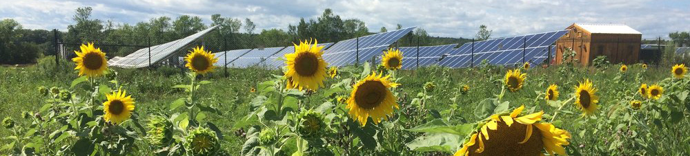 Solar array with sunflowers
