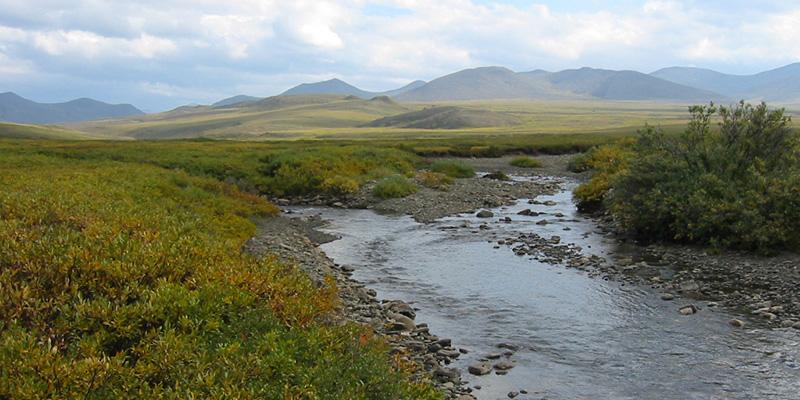 Arctic stream. Courtesy of Breck Bowden.