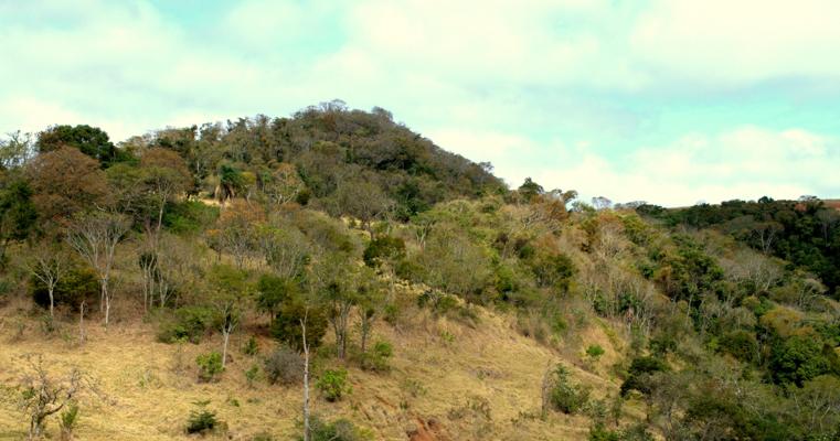 Brazilian Cerrado