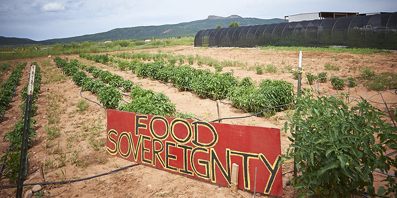 """Crops grow around a sign that reads """"Food Sovereignty"""" the People's Farm."""
