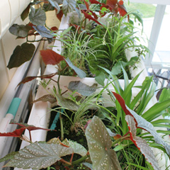 Plants thriving in the Eco-Machine