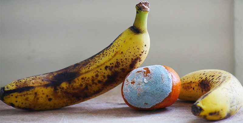 An images of typical household food waste: bruised bananas and a moldy orange