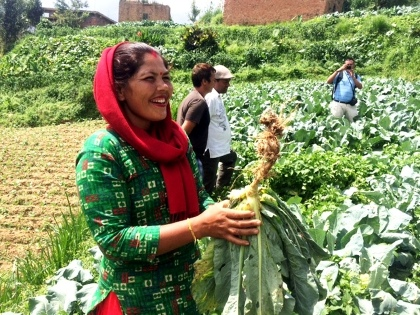 A Nepali farmer examines a plant for clubroot during a farm visit.