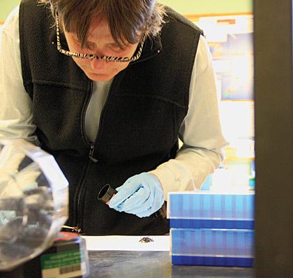Professor Lori Stevens in her lab