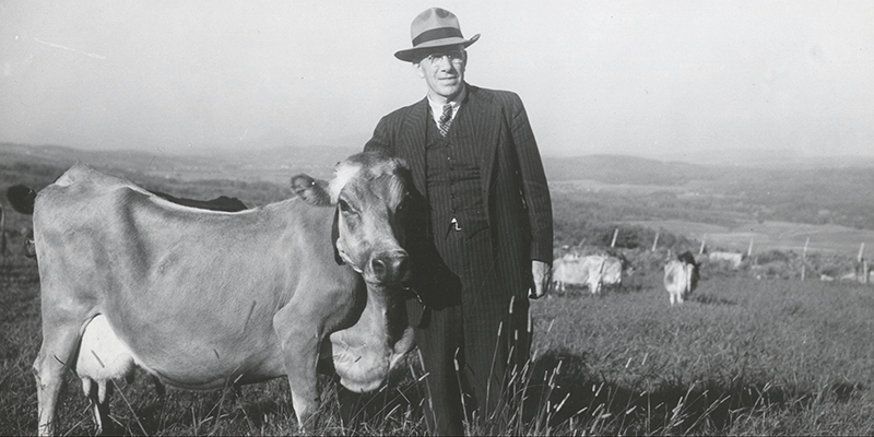 Senator George Aiken with cow