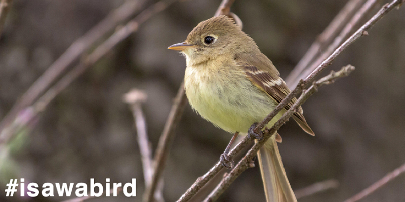 Small bird sits on a branch. Text reads, #isawabird
