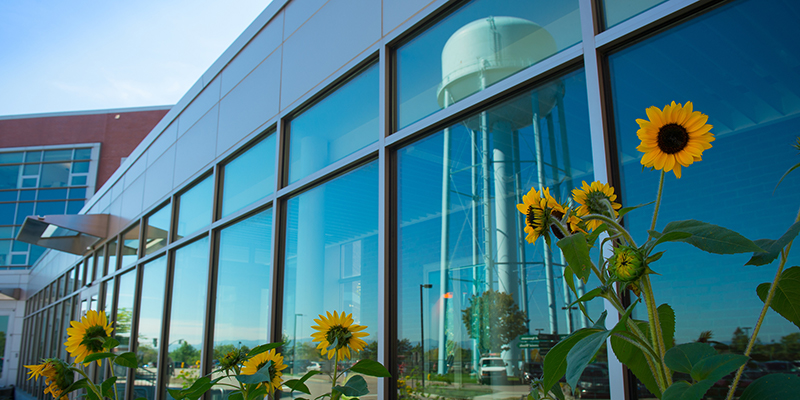 Sunflowers and a water tower reflected in windows