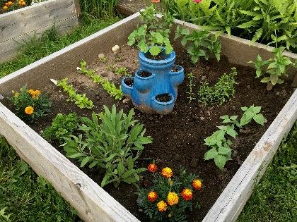 Garden box in yard