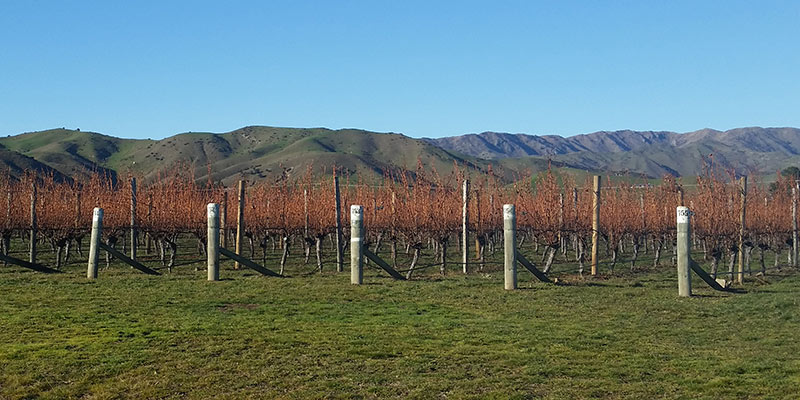 Vineyards with green mountains