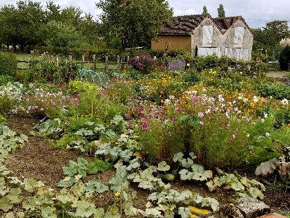 A fertile garden in a backyard