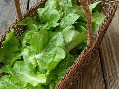 Lettuce in a basket