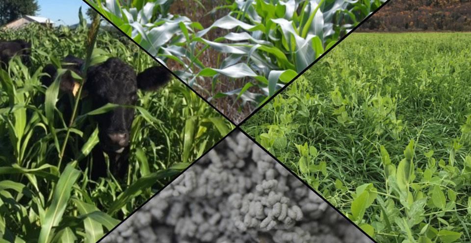 No-Till Cover Crop Symposium