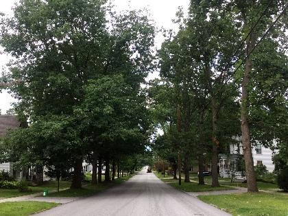 Trees down an urban street
