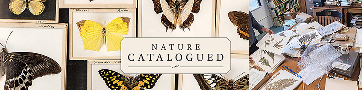 "butterfly specimens in a case, with the title ""Nature Catalogued"""