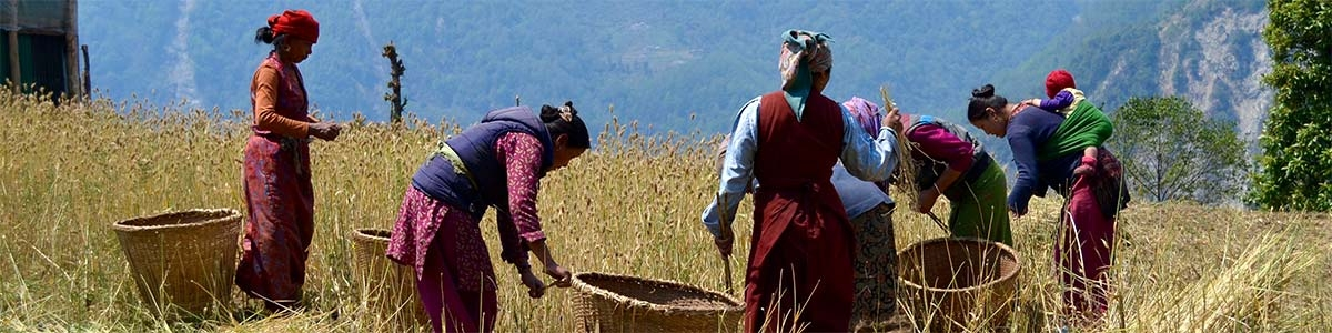 Working in the fields in Nepal