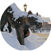 Catamount Statue covered in Snow