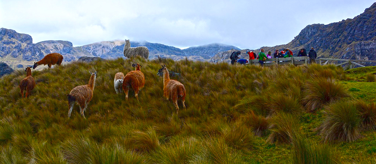Grass Paramo, Ecuador by Ashley Weltz