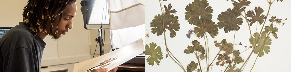 College student studying plant biology. And close up view of a pressed plant.