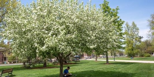Spring campus vista