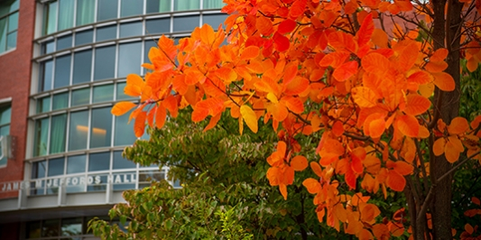 Jeffords Hall with bright orange fall leaves