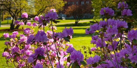 springsummer williams hall