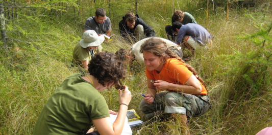 students seated in tall grass identifying plants