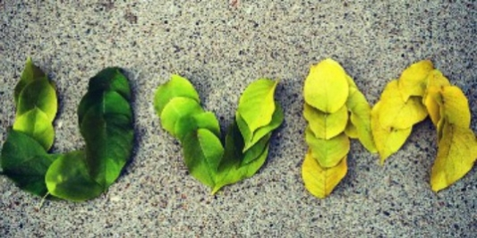 green and gold leaves spelling out UVM