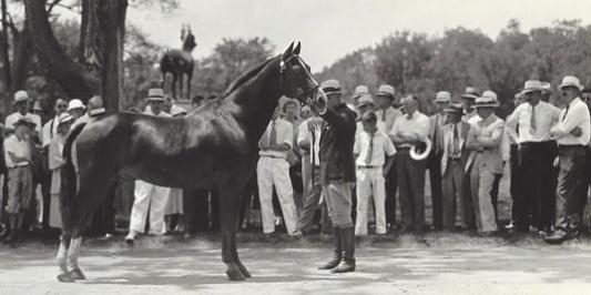 Visitors in 1934 Viewing Morgan Horse