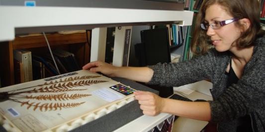 woman scanning herbarium specimen