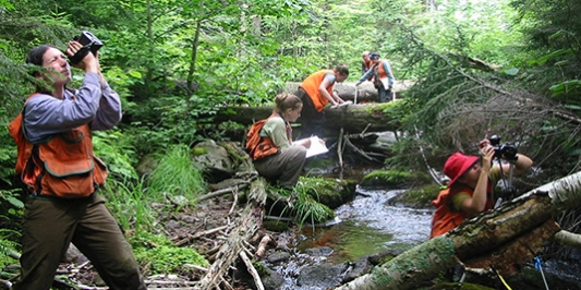 Students sampling stream and forest vegetation