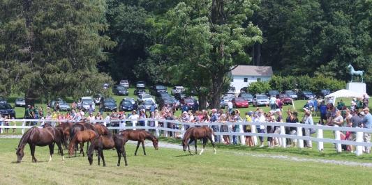 University of Vermont Morgan Horse Farm