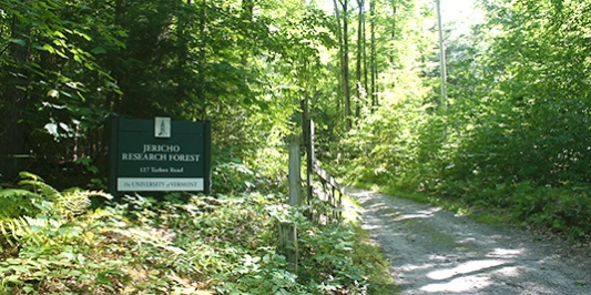 Dirt road entrance and sign for forest