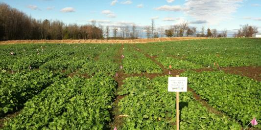 Cover crop trials at Borderview Farm
