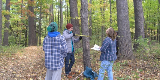 Students identify trees along a transect.