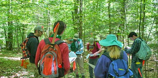 Forestry students in Talcott Forest