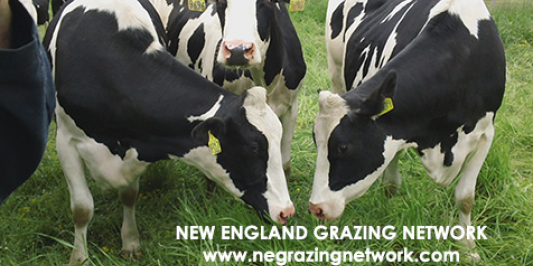 image description: black and white cows in a green field with their faces towards each other. at the bottom of the image are the words new england grazing network, aligning efforts
