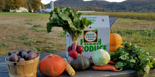 image description: bright fall vegetables on a wooden picnic table in a field