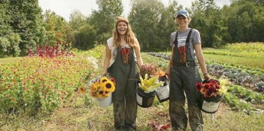 UVM Catamount Farm students harvesting flowers