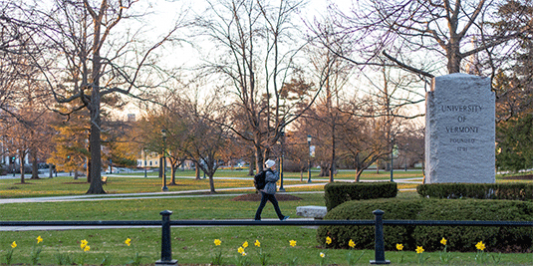 Student walking on University green with daffodils in bloom