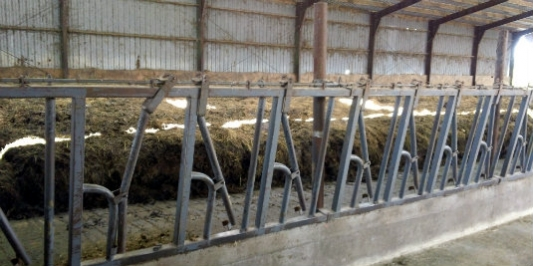 side view of the pack in a barn