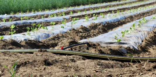 Raised beds are one strategy for promoting drainage of farm soils.
