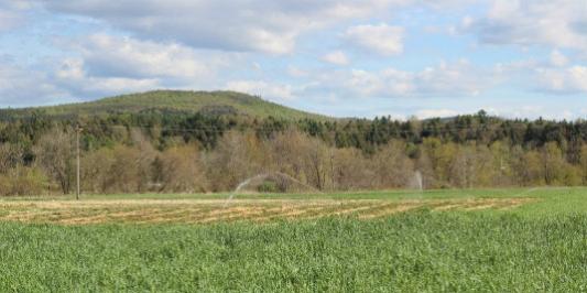 Drip and overhead irrigation can each meet farmers' needs.