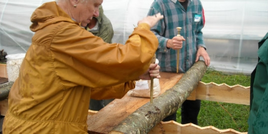 Preparing Shiitake Logs for Inoculation