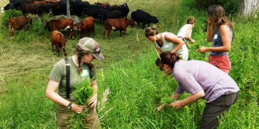 Farmers Gathering Weeds at a Workshop on Grazing & Invasive Plants