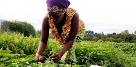 Janine Harvesting Lenga Lenga