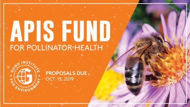 Gund Institute for Environment Apis Fund RFP for bee pollinators