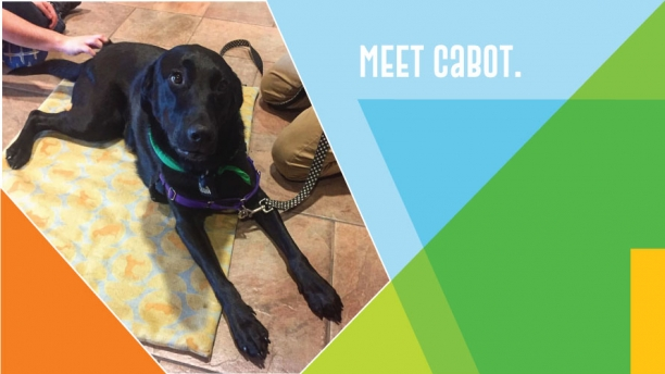 Meet Cabot (the therapy dog).